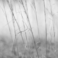 a delicate moment by sandpiper764