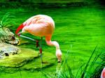 Charming flamingo