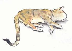Sleeping cat by Seferia