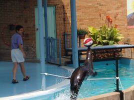 Sea Lion from St. Louis Zoo 2 by Seferia