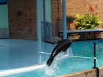 Sea Lion from St. Louis Zoo 6