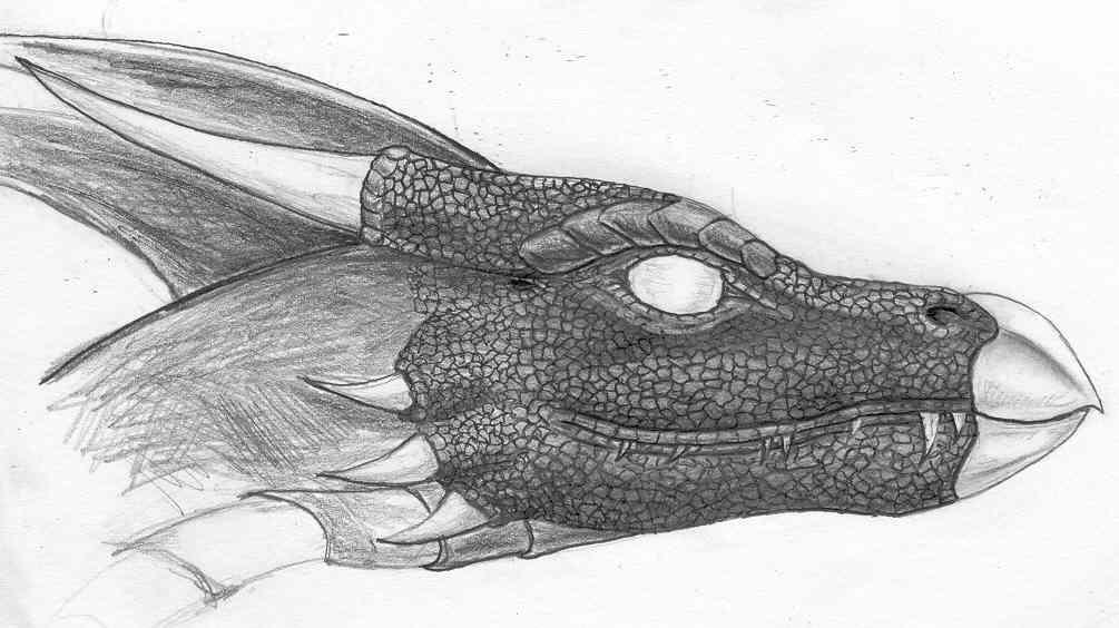 Seferia head study sketch by Seferia