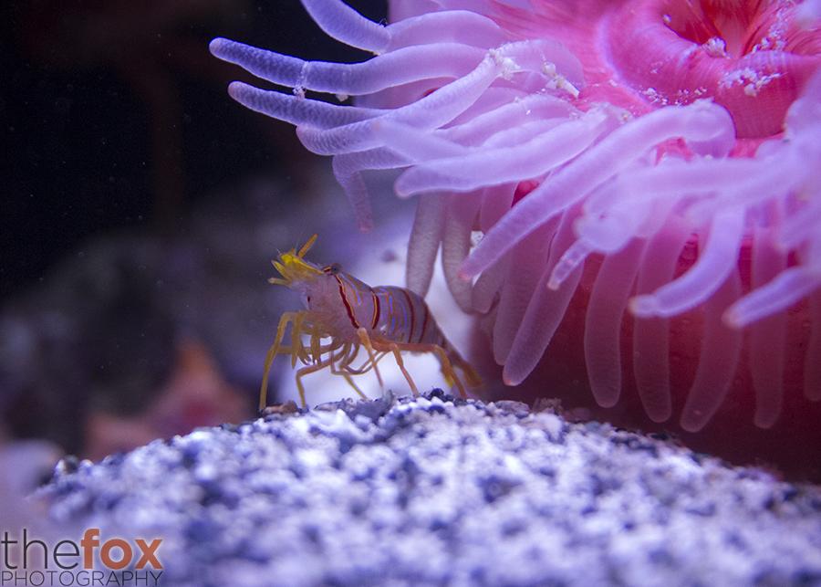 Aquarium Photographers Night 4 by Thy-Fox