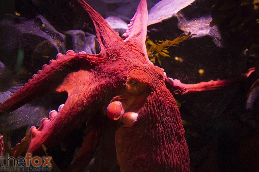 Aquarium Photographers Night 5 by Thy-Fox