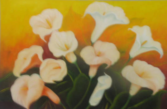 Calla Lilies in the sun