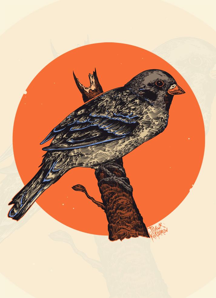 Bird by TimurKhabirov