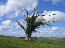 Dead Tree by Troll-Stock