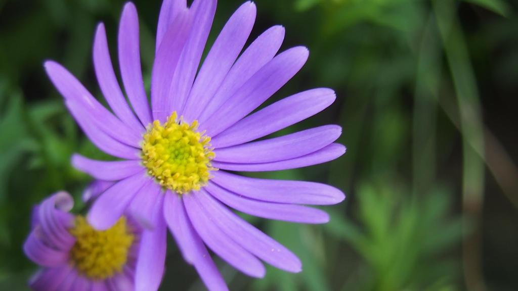 Purple flower by CookieCookieCupcake