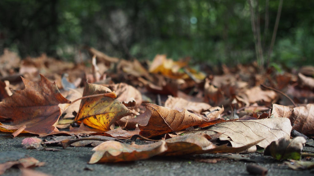 fall by CookieCookieCupcake