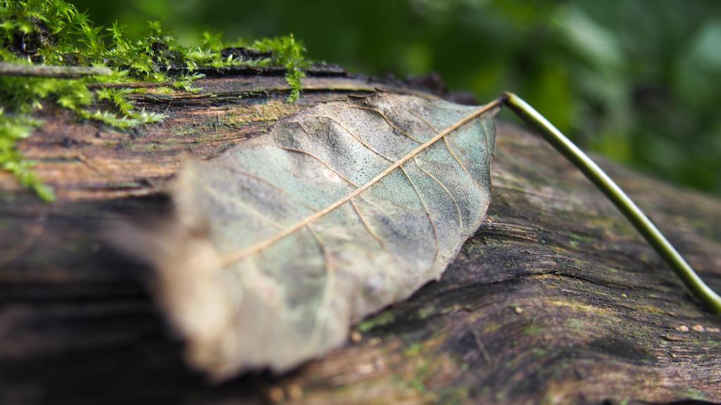 leaf by CookieCookieCupcake