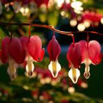 Those Patio Lanterns by charliesmyangel