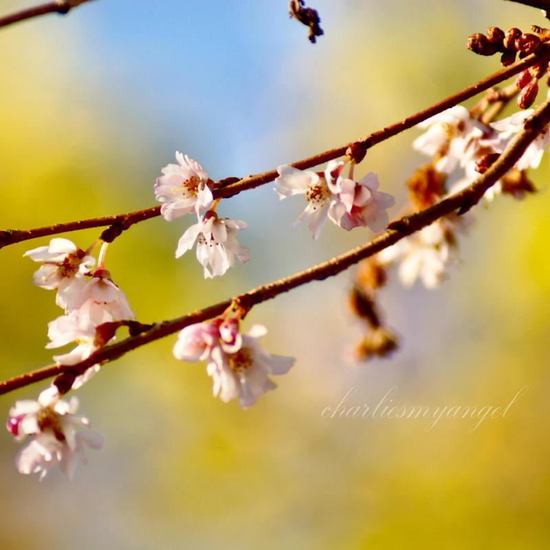 Signs of Spring by charliesmyangel