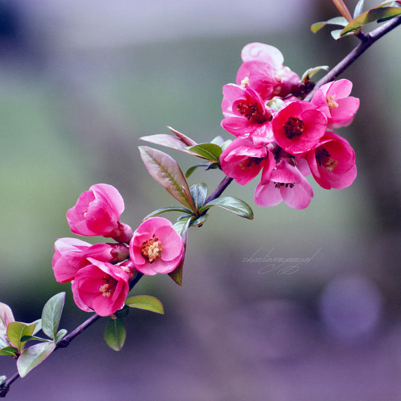 14/52 - Vision of Spring by charliesmyangel
