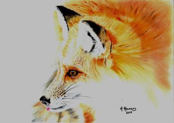 Fox by HendrikHermans