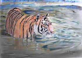 Tiger by HendrikHermans