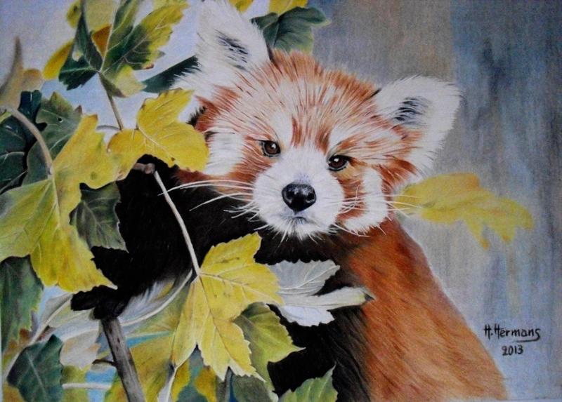 Red Panda 2 by HendrikHermans