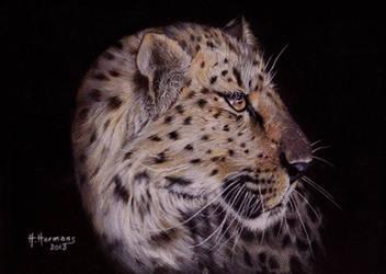 Leopard by HendrikHermans