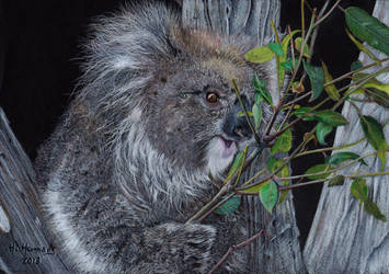 Koala by HendrikHermans