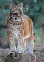 Asian golden cat by HendrikHermans