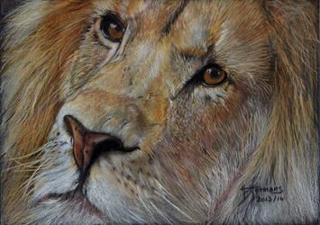 Lion by HendrikHermans
