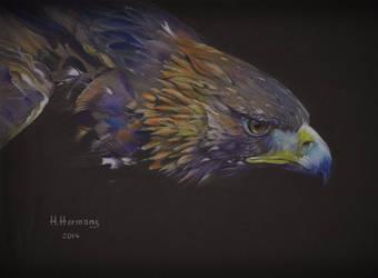 Eagle by HendrikHermans