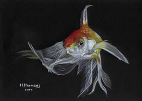Goldfish by HendrikHermans