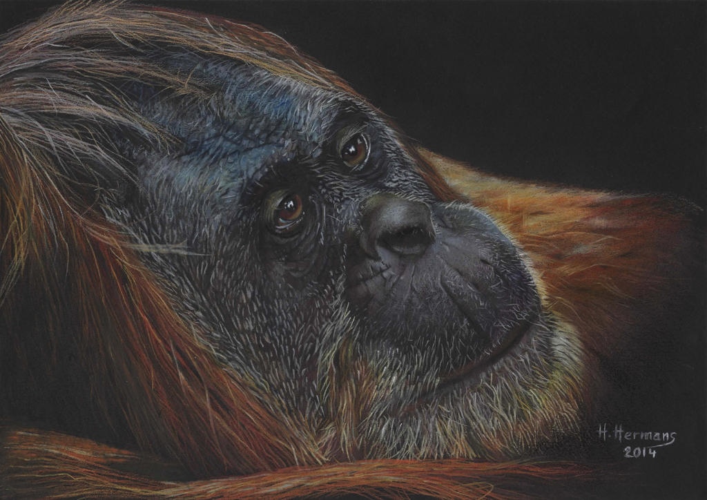 Orangutan by HendrikHermans