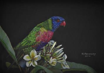 Rainbow Lorikeet by HendrikHermans