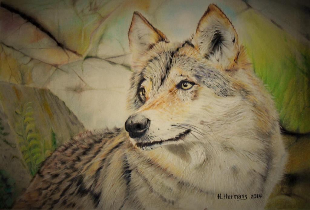 Wolf 4 by HendrikHermans
