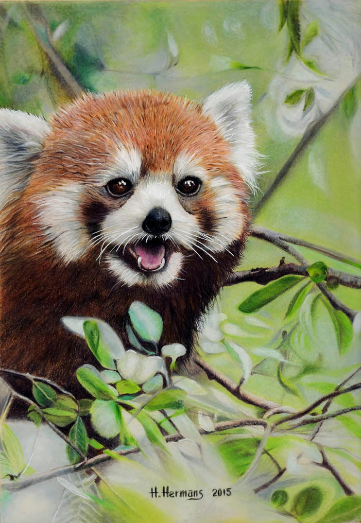 Red Panda 3 by HendrikHermans