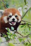 Red Panda 3 by HendrikHermans