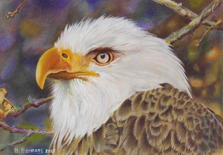 Bald eagle by HendrikHermans