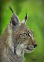 Lynx 3 by HendrikHermans