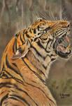 Tiger2018