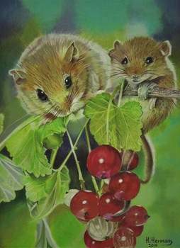 Rat (red) Berries