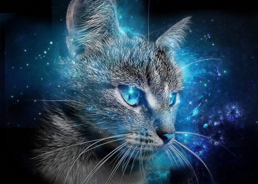 Cat Blue Eyes Wallpaper 2015 By Badr DS