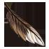 Feather - Brown by Mothkitten