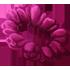 Flower Crown - Tulip by Mothkitten