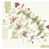 Flower Crown - Lily by Mothkitten