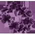 Flower Crown - Lilac by Mothkitten