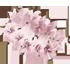 Flower Crown - Cherry Blossom by Mothkitten