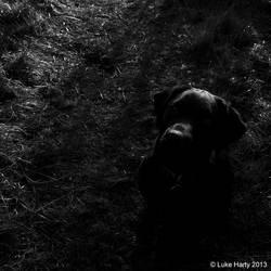The Black Dog of Mischief by PointyHairedJedi