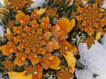 Frosty Bloom by HarleyBliss