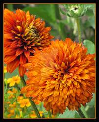 Orange Puffs
