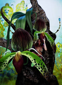 Orchid Fae