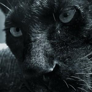 Hypnotize11's Profile Picture