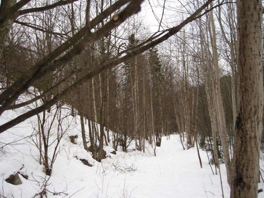 Snowy forest by Reinohikari