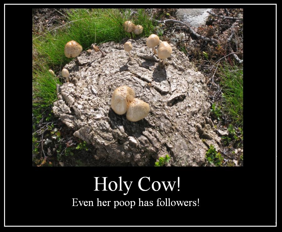 Holy Cow by Reinohikari