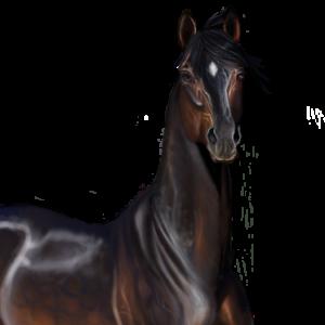 Rivaillem's Profile Picture