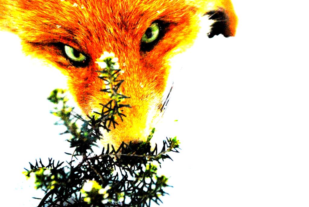 DankeFox's Profile Picture